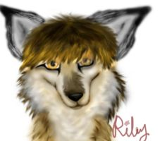 Riley Coyote the Drummer by Xmidnightblackwolfx