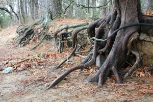 Roots by DonLeo85