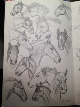 Horse head sketches by cookie2202