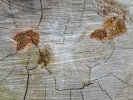 Wood Texture 3 by Ox3ArtStock