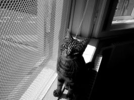 Bailey in a window by PipFish