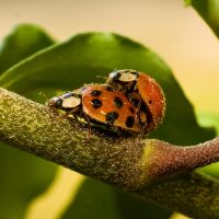 Ladybugs by explicitly
