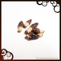 Morel Mushrooms by lily-inabottle