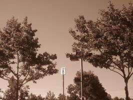 21st Century Sepia: Tree Lot by cillanoodle