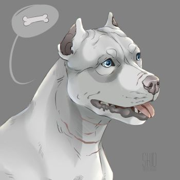 Pit bull by Mr-SKID