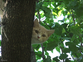 TreeCat by Duratec