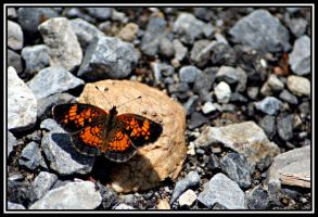 Butterfly by antiemo