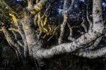 Elfin Forest by FabulaPhoto