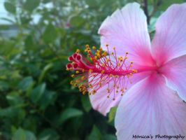 Flower. by MonicaSousa