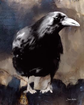 Crow by jhutter