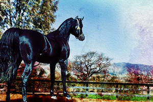 The Black Stallion by comlodge