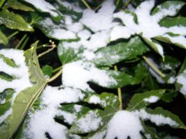 snow and leaves by jordster4000