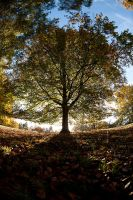 Autumn oak by pnewbery