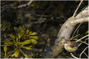 Chincoteague Sparrow by ThisWomanWanders