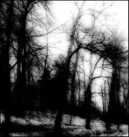 Ghosts of the wood... by ansdesign