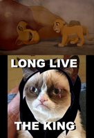 Grumpy Cat killed Mufasa by akgaimer