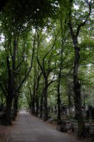 Olsany Cemetry by FurioussMales
