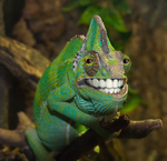 Chameleon Smile by Poody-champa