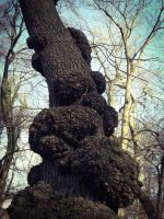 Growths on the tree II. by AloneJane