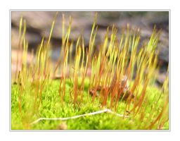 Mossy Spores by NEME5IS