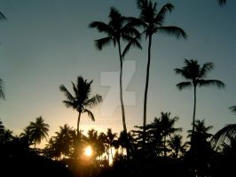 Behind Palm Trees by MiniMini24