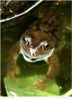 Huggy Froggy by In-the-picture