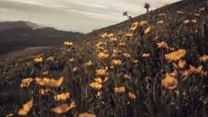 Field on the Edge by mhall231