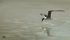 Terns are awsome! by fablau