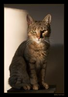 Catqueen Cleopatra the I by RRVISTAS
