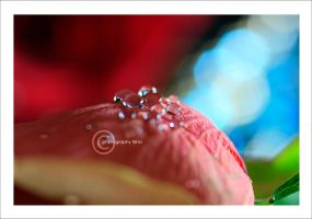 ::Pure Love:: by Al3ashAlh