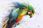 The Color Parrot by huatunan