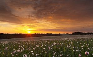 Poppies 2012 by JakeSpain