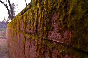 Brick and Moss by remyrob
