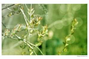 Green Plant by xPerigryn