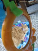cat in the mirror by CotyStock