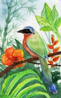 Tobago: Blue Crowned Mot-Mot by Aeternus-Spero