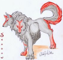 Shadow_The Mystical Wolf by WhiteSpiritWolf