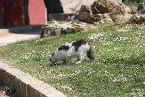 cat in Rovinj 2 by ingeline-art