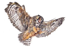 Owl - realistic drawing by Katchina-Q2