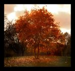 autumn tree by ssilence