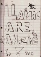 llamas are amazing by zule-of-fire