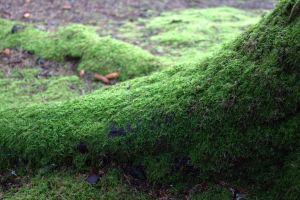Moss by RadioactiveFlowers