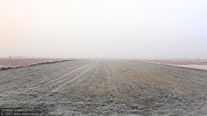 The White Emptiness by Dhante