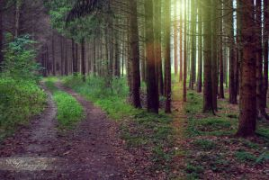 Forest road by NickBaker1689