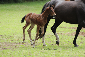 Escada and foal Stock 2 by Saerl