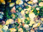 Autumnal.. by mulatre
