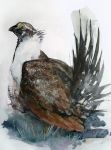 The greater sage grouse by cabaree