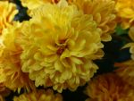 Yellow Flower by salvadorsam