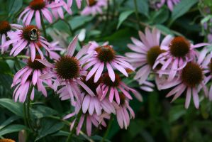 view to echinacea 2 by ingeline-art