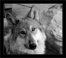 Wolf Eyes by hell0z0mbie